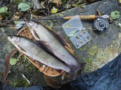 Нахлыстовое удилище и рыба